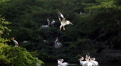 Bird flu spreads in 15 of 33 Raj