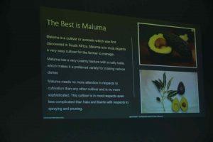 महाराष्ट्रात अव्होकाडो फळ लागवडीस चालना देणार