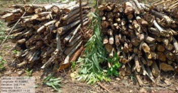 1,000 tonnes of free firewood